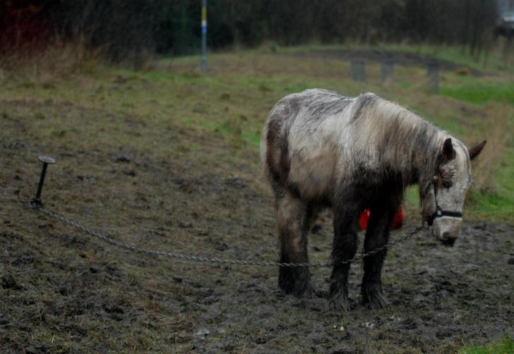 Horse Rescue- Tethered horse at the side of the road