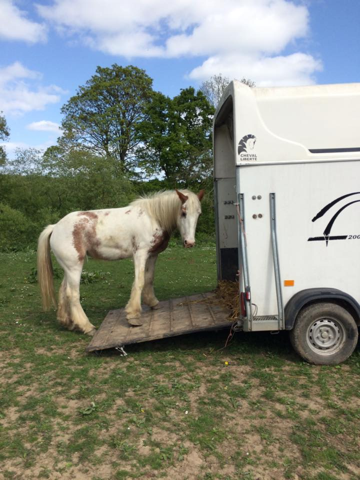 A pony practices loading