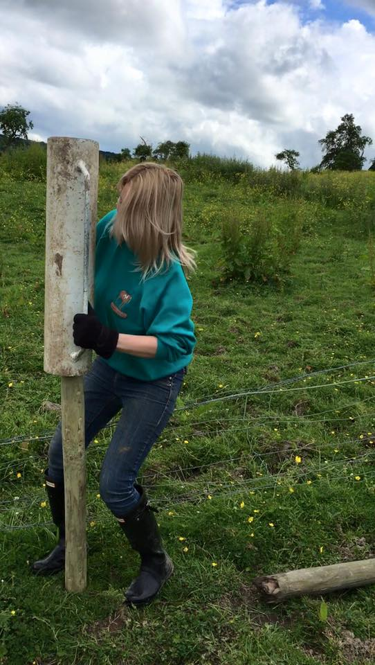 Fence posts being erected