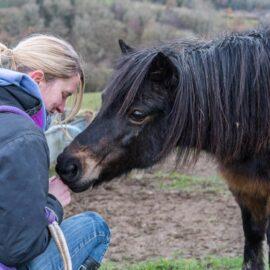 Minx the pony