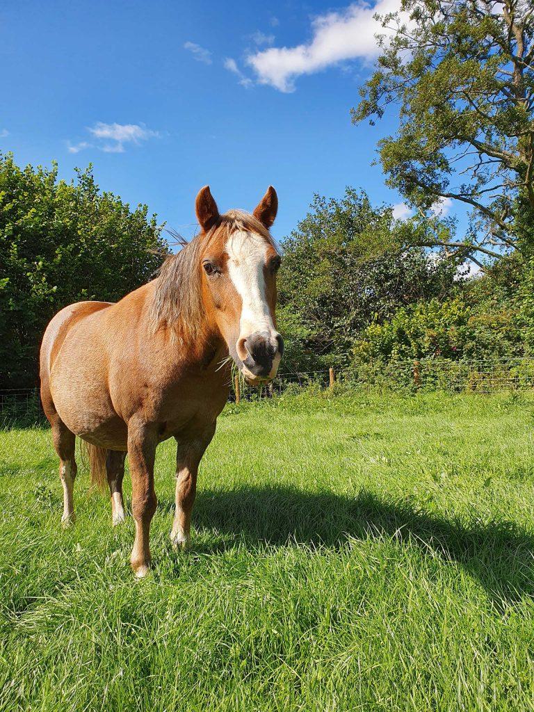 Pretty rescue pony, posing for the camera