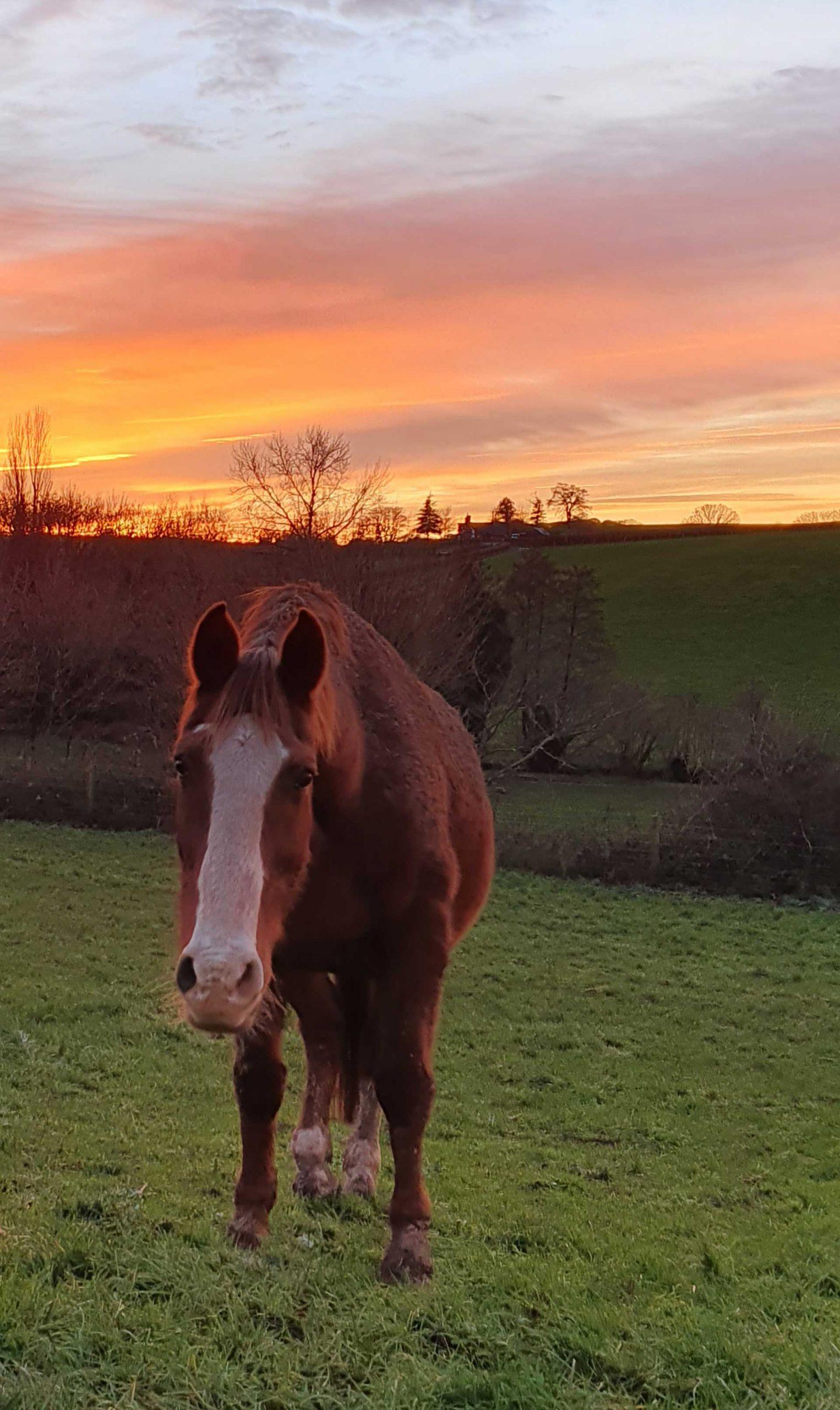 Chestnut horse in front of orange skies
