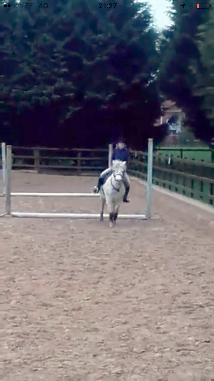 Freckles being ridden over jumps in new home